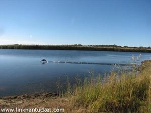 Hummock Pond